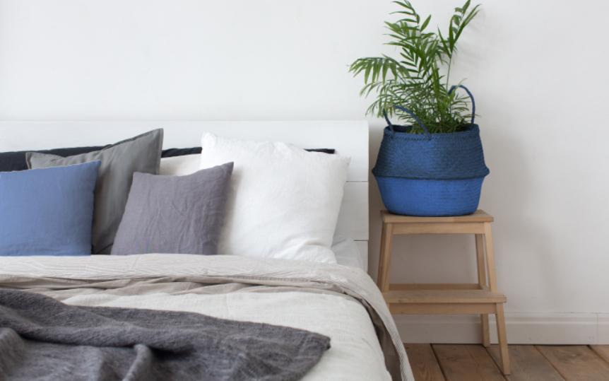 Piante da interno 5 idee per la camera la stanza perdormire - Piante in camera ...